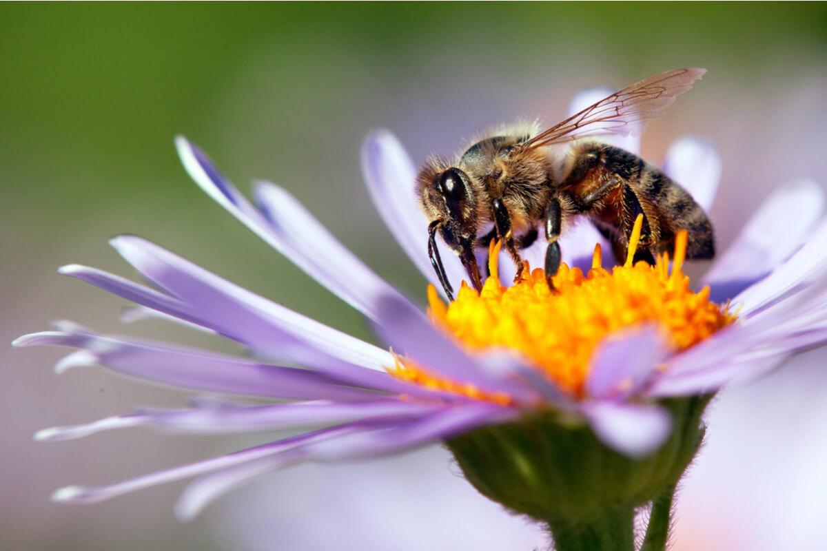 Le api vigilano sull'ambiente idee rinnovabili