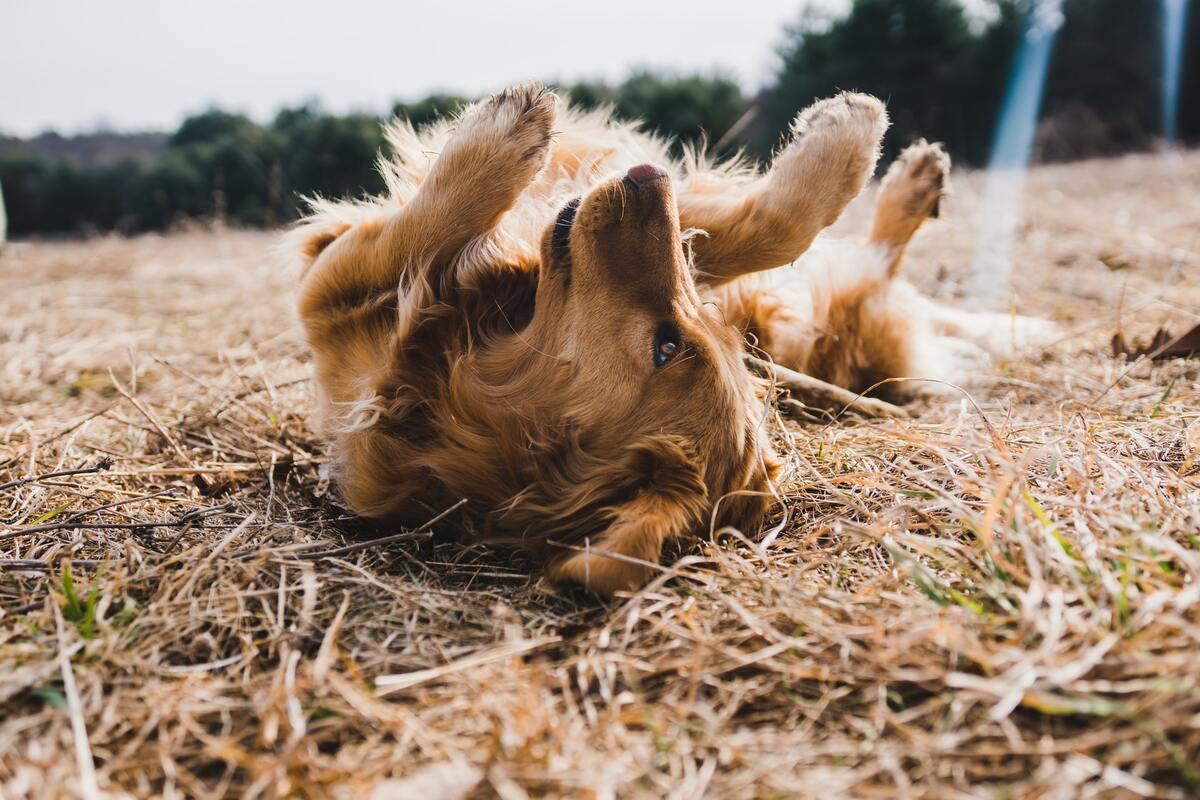 psicologo per cani cosa fa