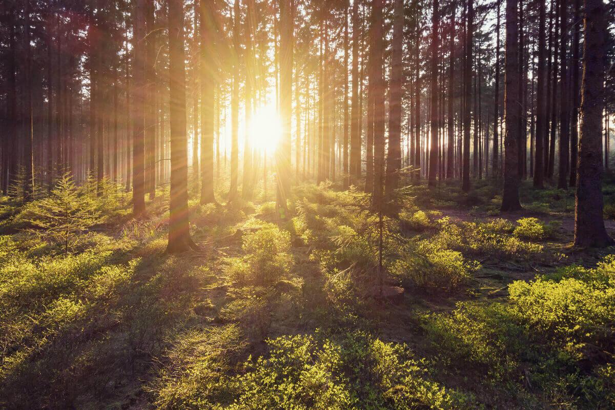 le foreste Ue possono assorbire il doppio di CO2 sostenibilità ambientale