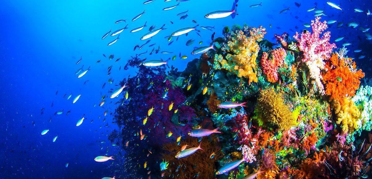 curiosità sugli oceani