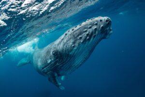 curiosità sugli oceani e il pianeta