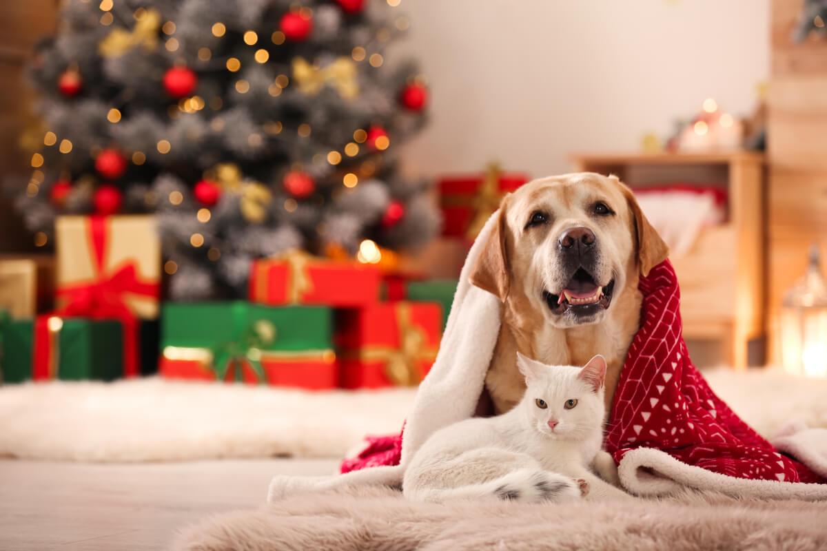 come affrontare la notte di capodanno con i nostri cani e gatti