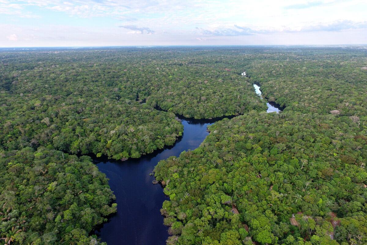 Greenpeace saluta il 2020 - foresta amazzonica
