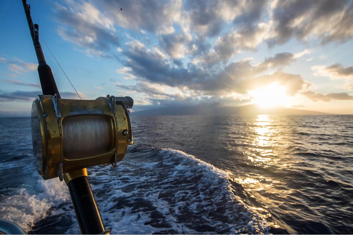 Pesca in habitat sensibili pesca aggressiva italia e ue