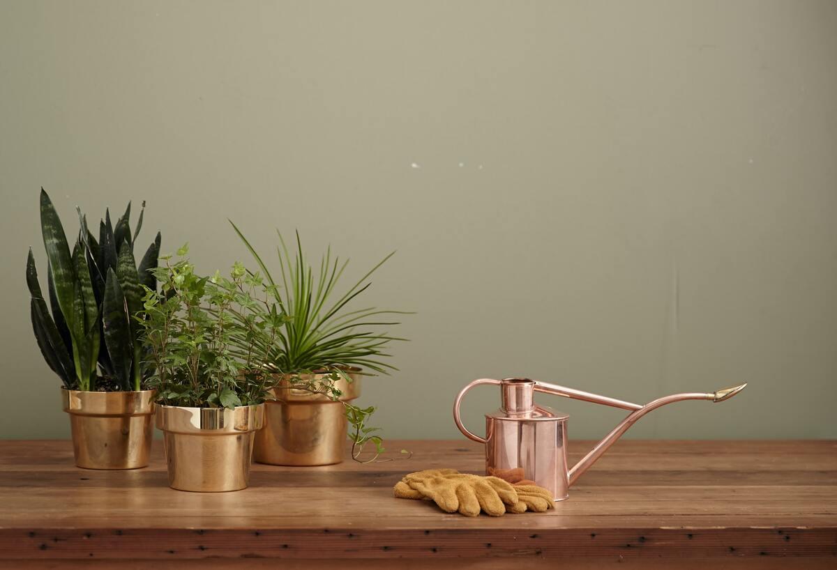 piante contro l'ansia rimedi naturali