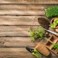 Creare spazi outdoor per le nostre case: l'intervista a SerreGiardini