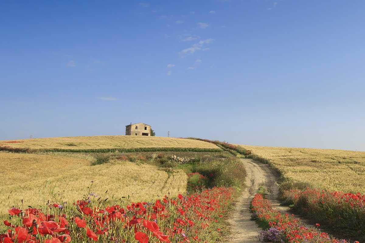 Ampliare una fattoria in maniera moderna e armoniosa con l'ambiente circostante