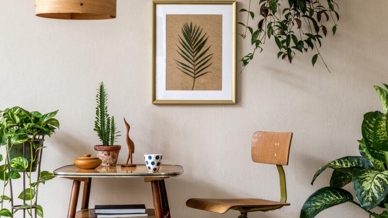 Casa Evergreen piante da interno - quali scegliere