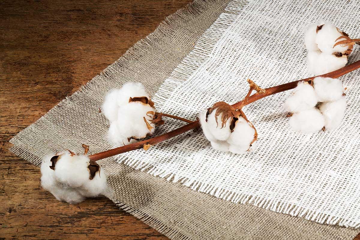 Fibre tessili naturali quali sono e come usarle