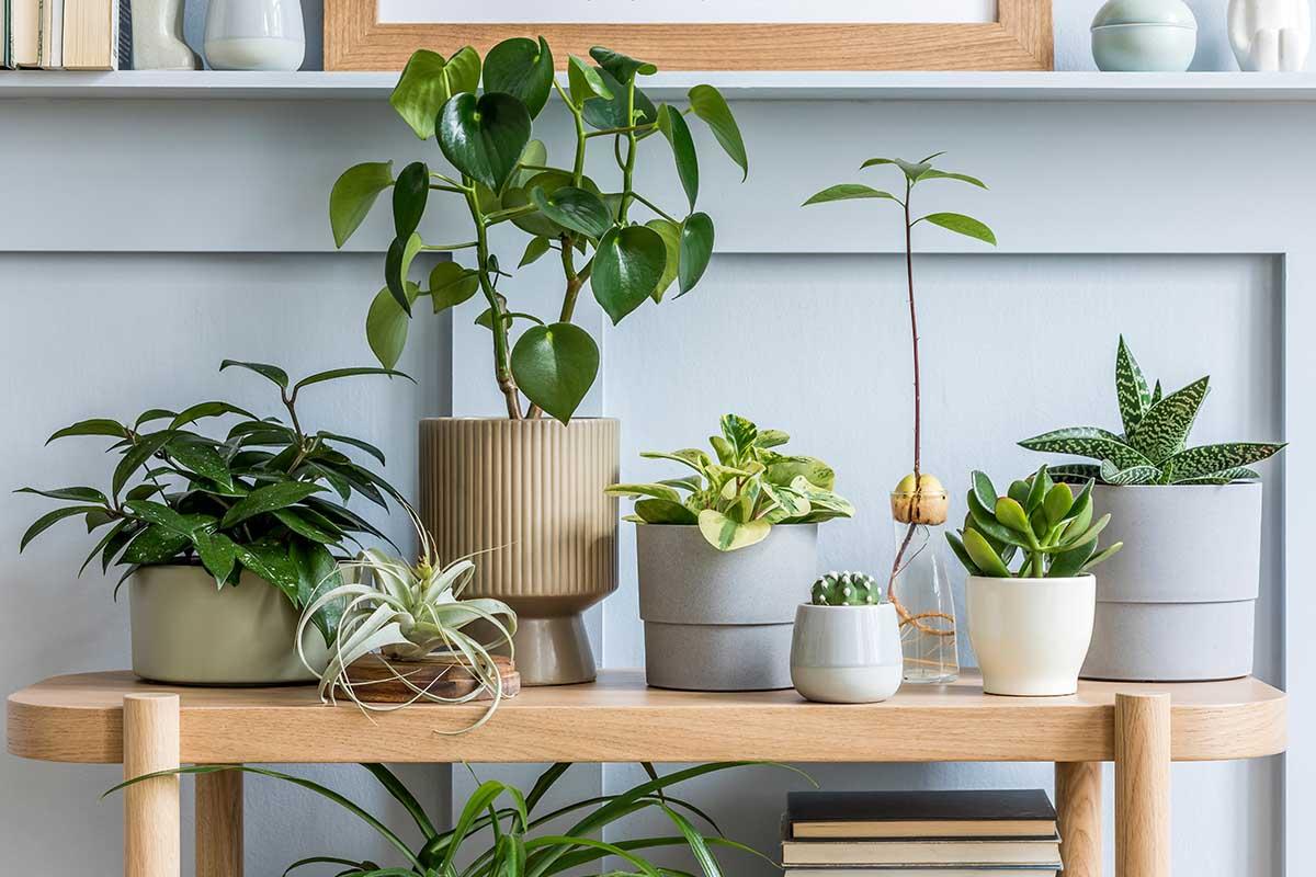 Giardinaggio creativo Origami steel, un brand all'insegna del verde