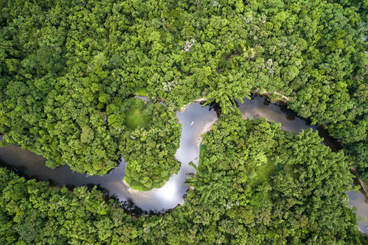 L'Amazzonia rischia di sparire - cause e conseguenze