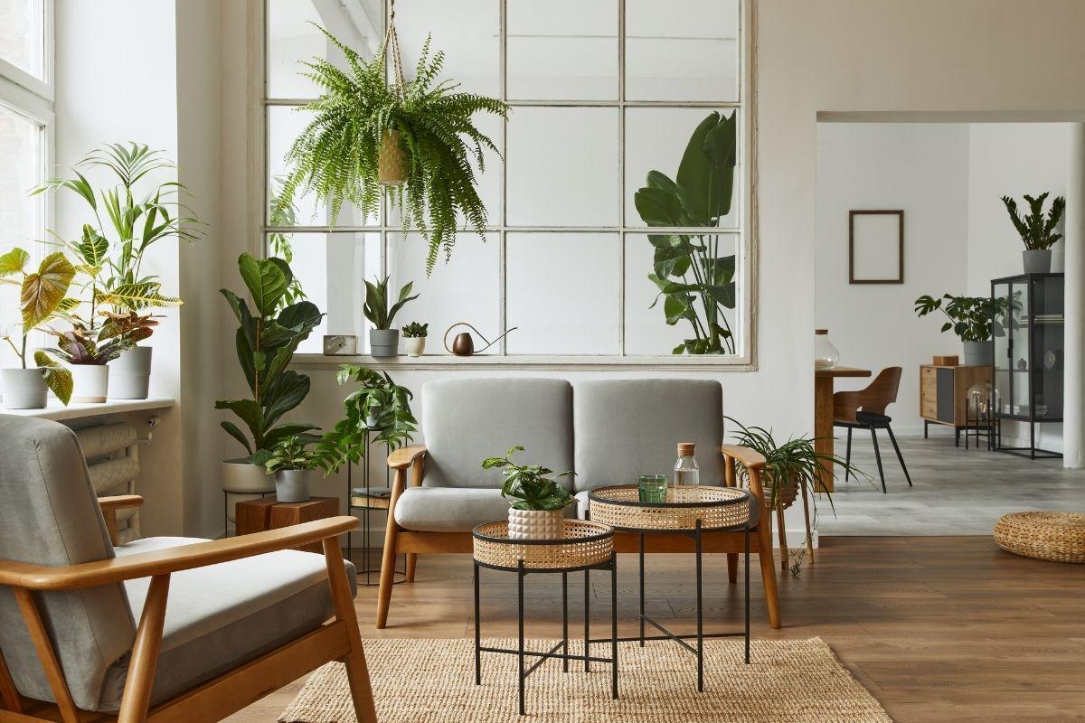 Piante Mania: esplosione di piante da appartamento