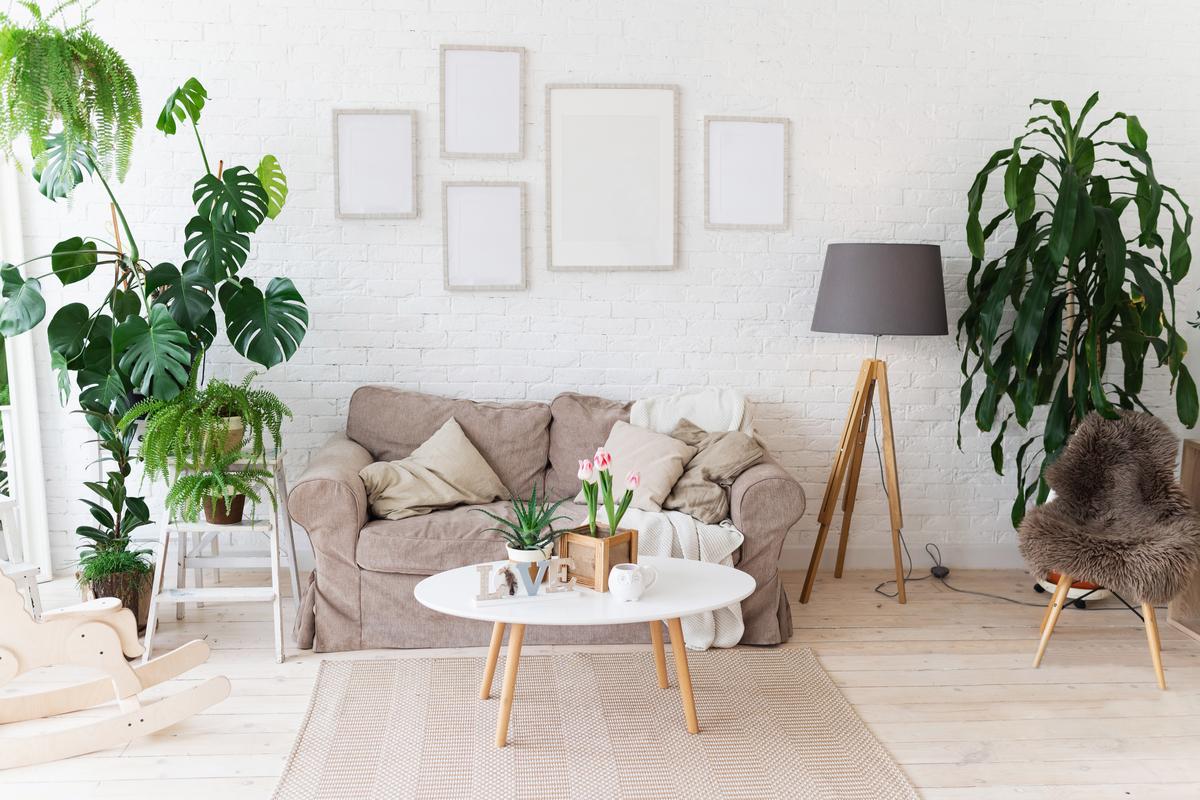 Casa Evergreen: piante a febbraio - quali scegliere