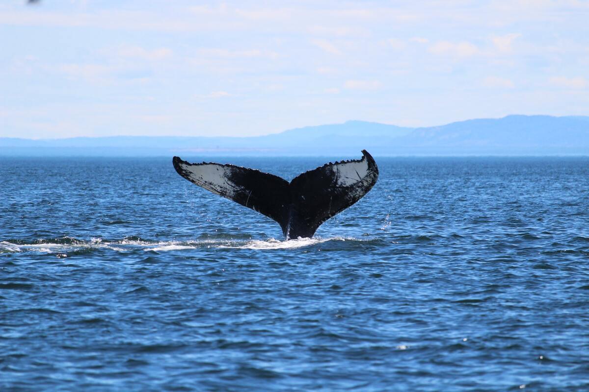 balene ed i cambiamenti climatici - relazione
