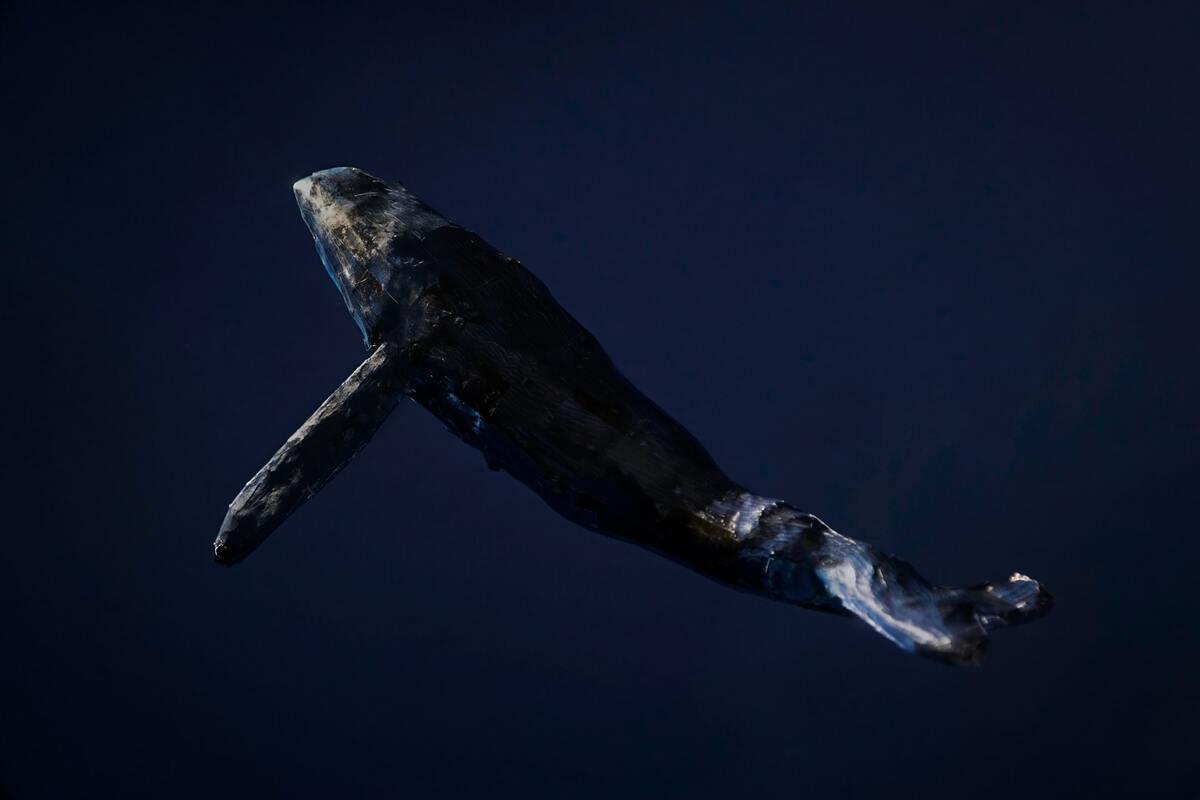 balene ed i cambiamenti climatici- relazione