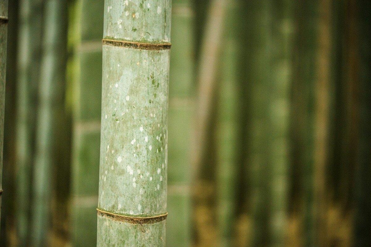 Bamboo materiale poliedrico