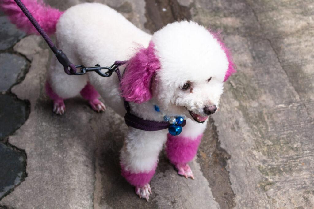 il maltrattamento emotivo del cane