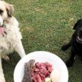 l'alimentazione naturale del cane