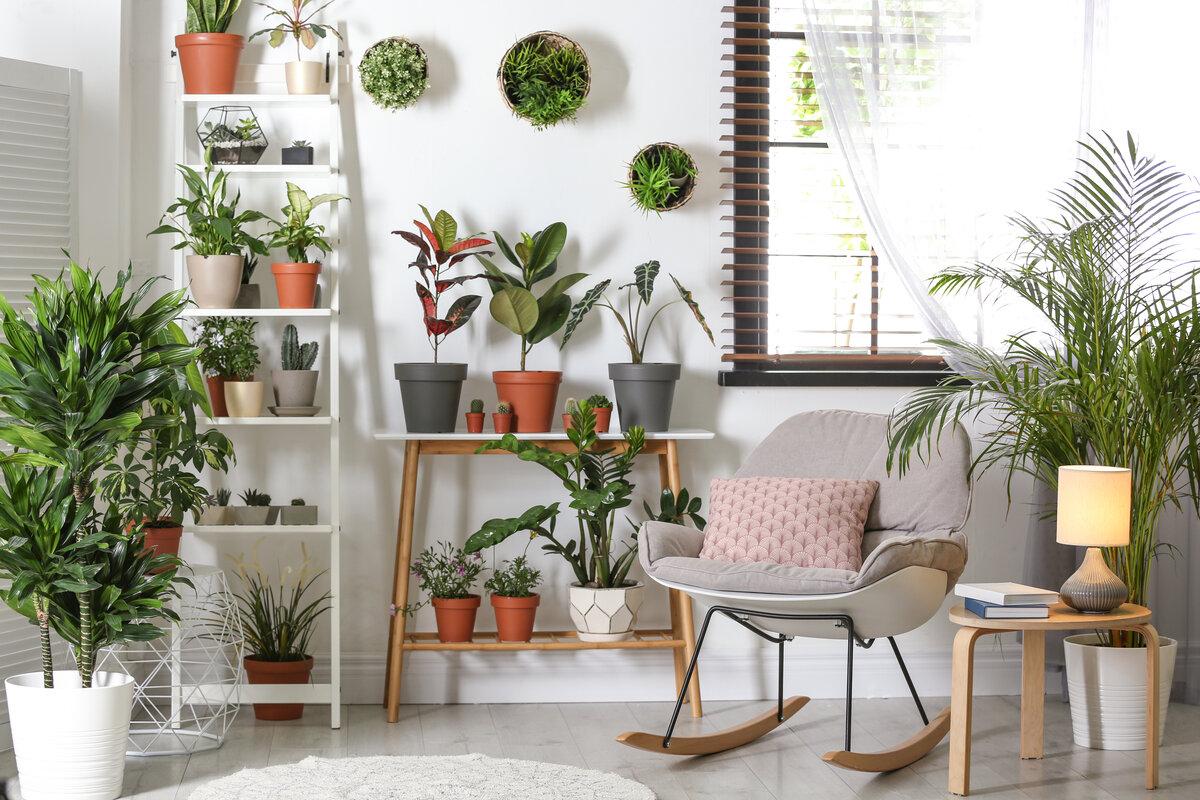 Creare un giardino in casa - piante in casa