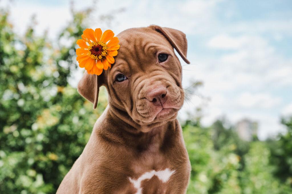 la gestione di un cucciolo
