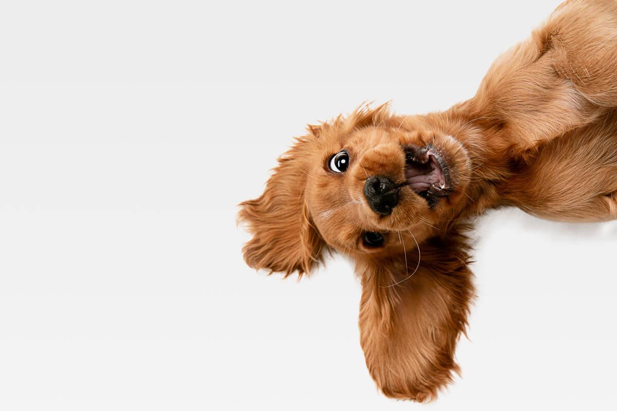 la gestione di un cucciolo in casa