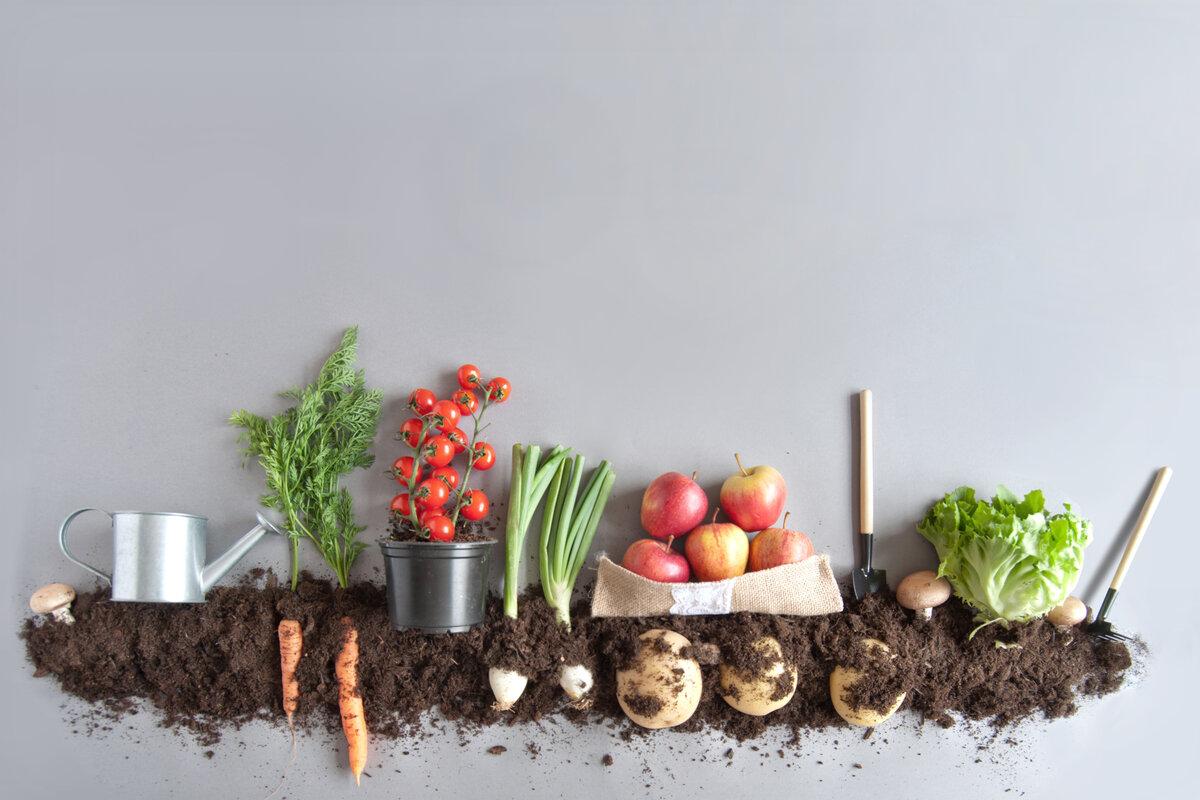 Legge sul biologico - prodotti biologici