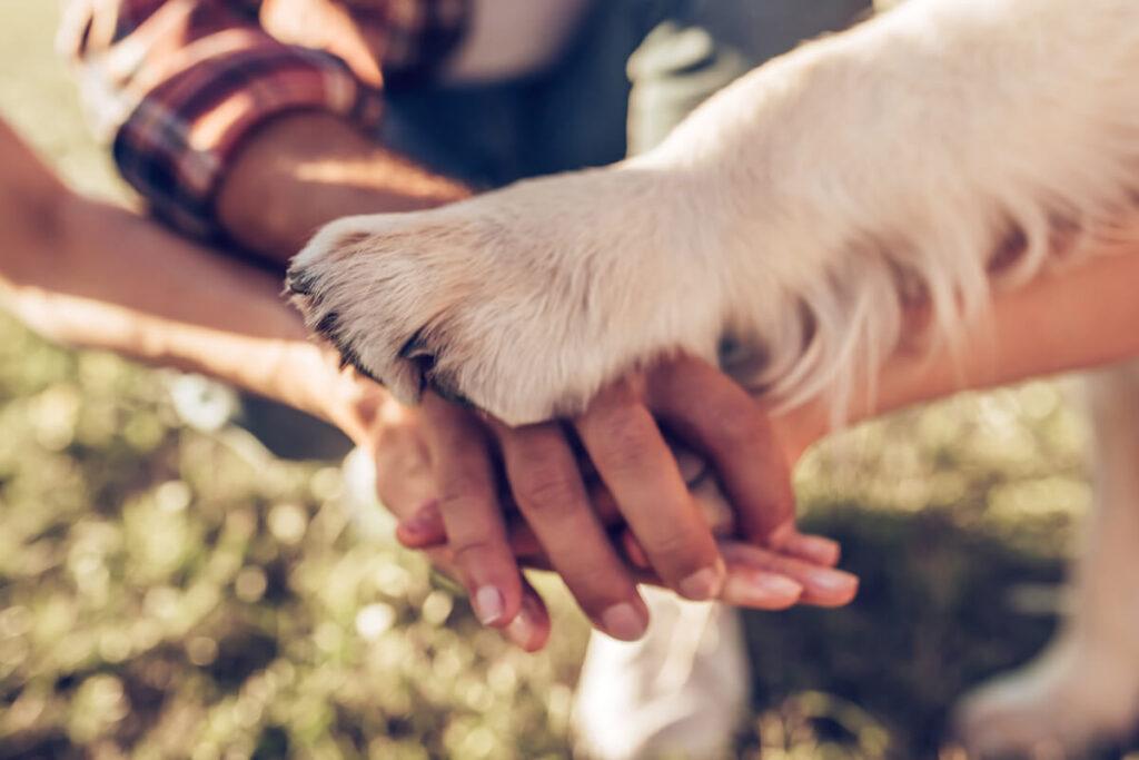 la guida per scegliere il cane adatto a noi