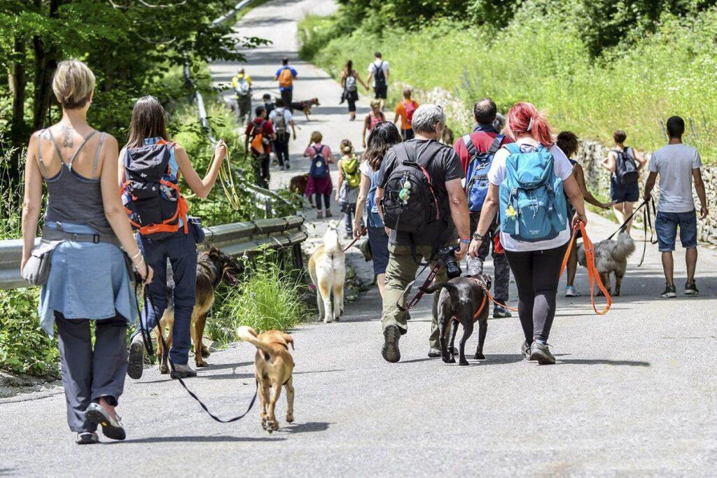 Le passeggiate sociali con i cani