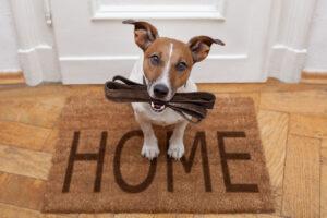inserire un secondo cane a casa