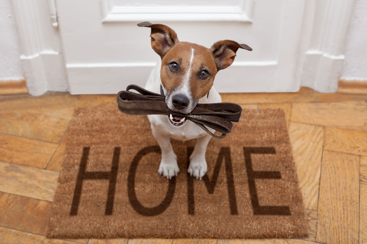 idee di arredamento per i cani