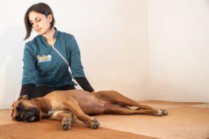 scopriamo i massaggi per cani
