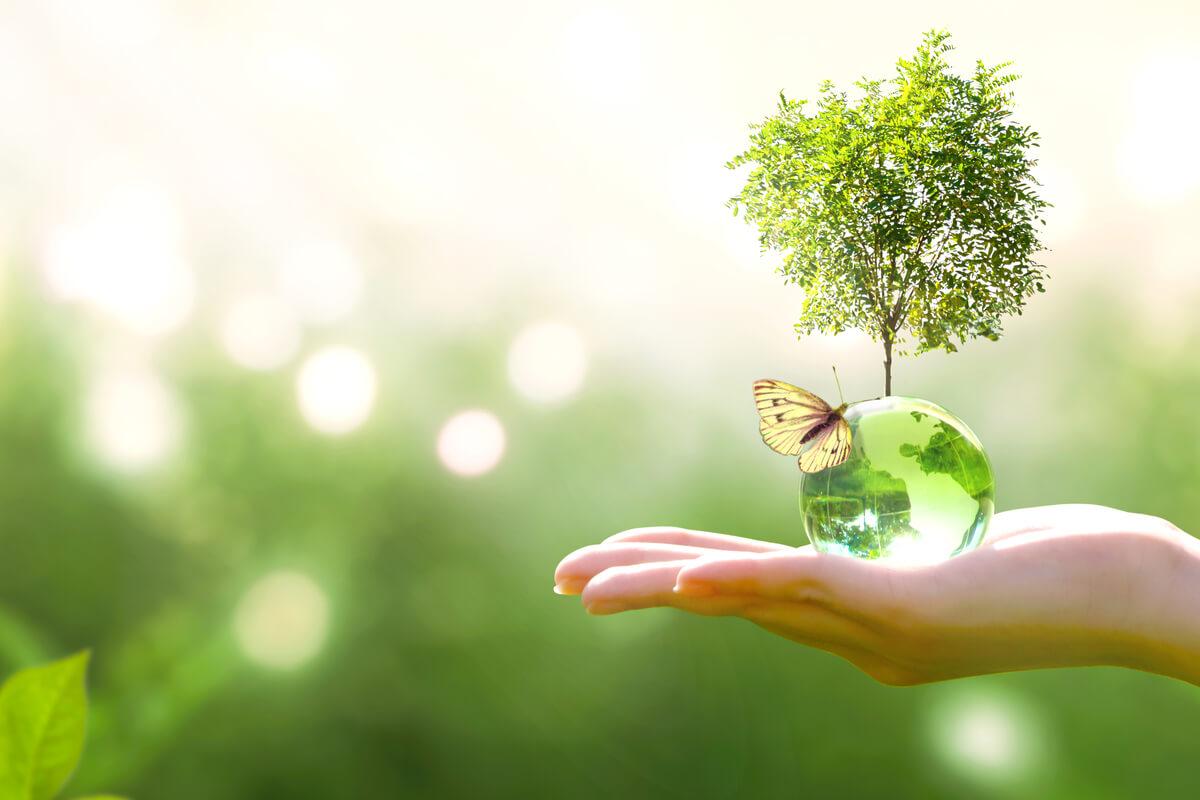 'ReNature Italy', un grande progetto per la natura Italiana - ambiente sostenibilità