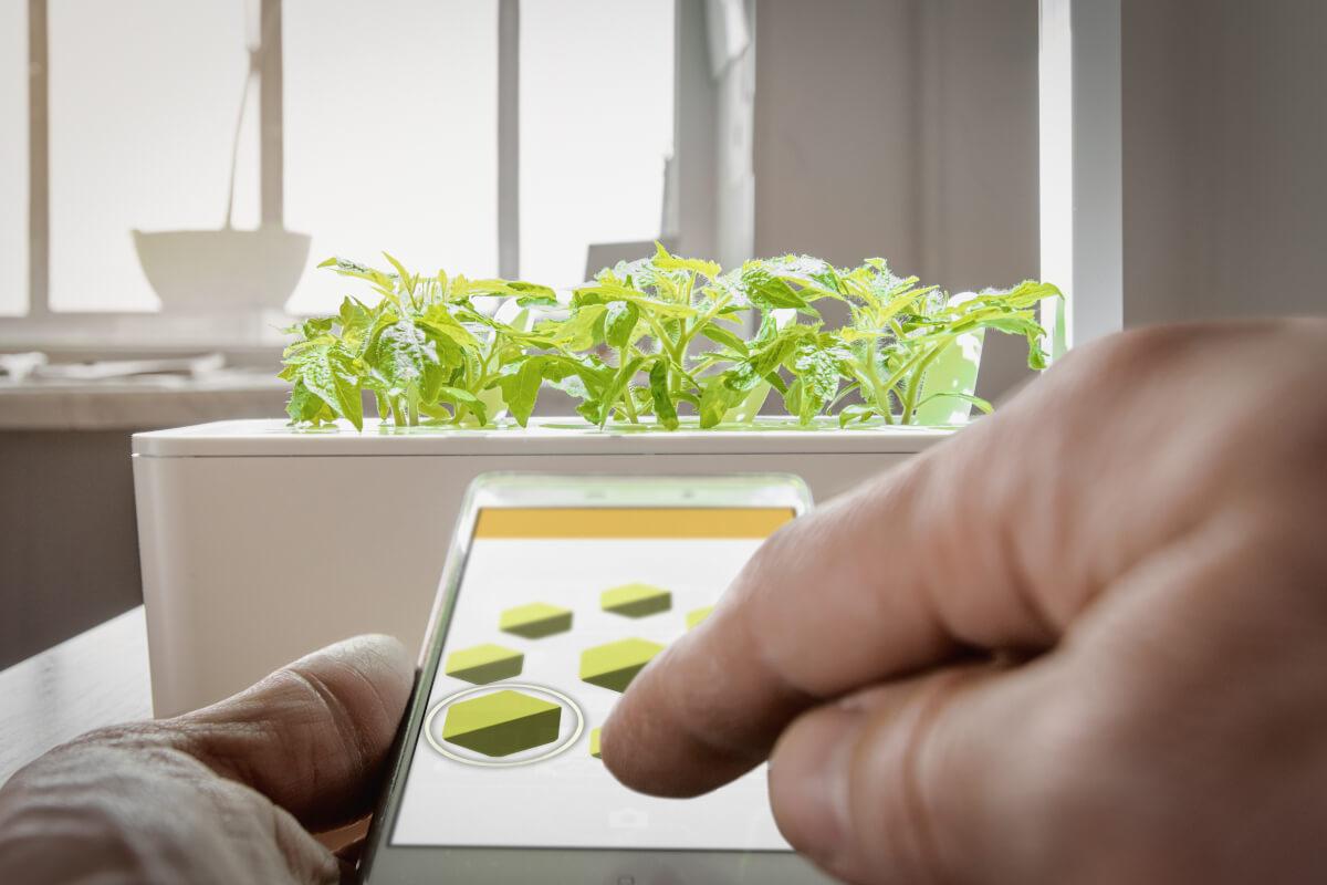Come avere un smart garden in casa