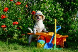 come rendere curato e sicuro il giardino per noi e i nostri cani