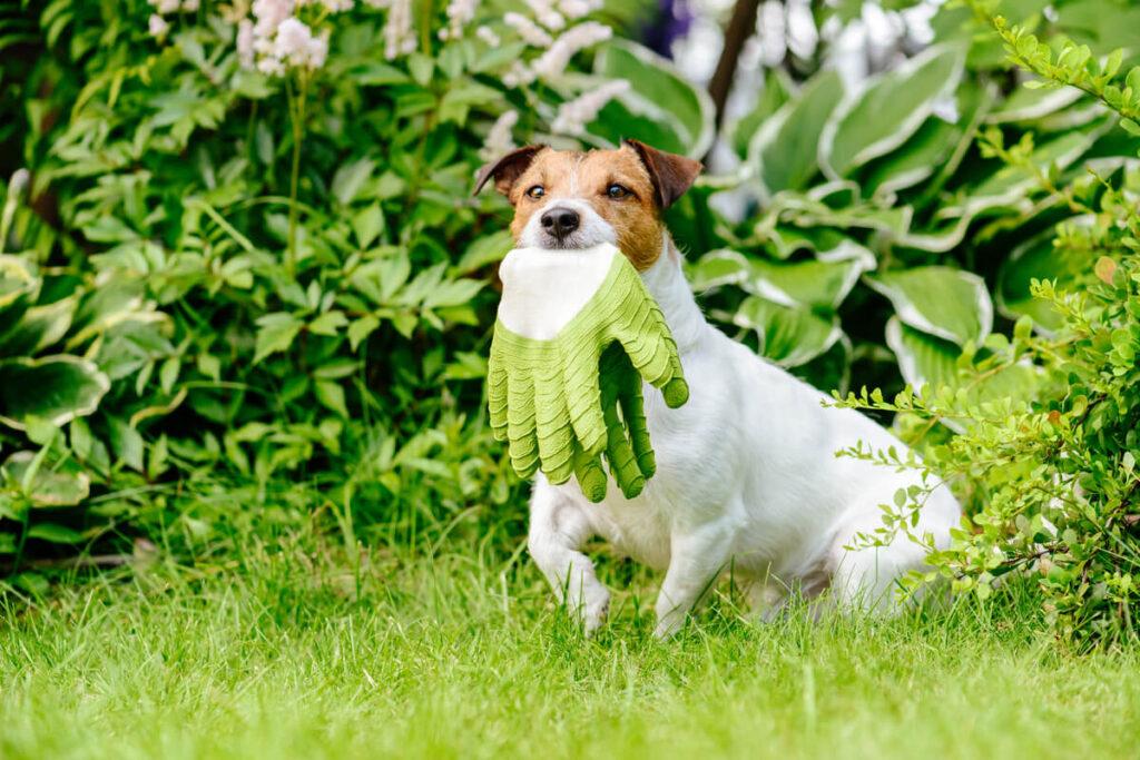 come rendere belli e sicuri i giardini per i nostri cani