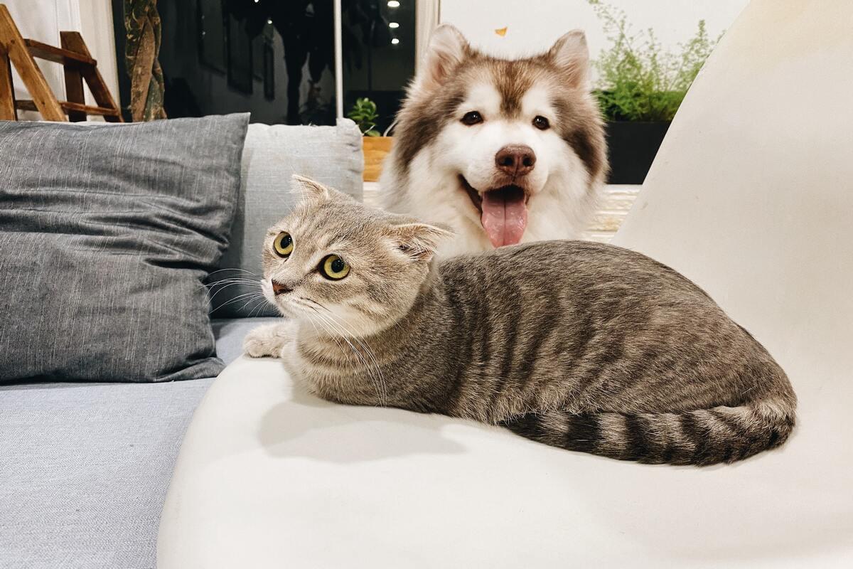 consumo d'acqua dei piccoli animali - cane e gatto