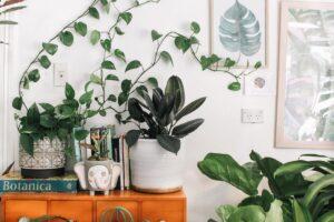 Eliminare l'umidità con le piante - come fare