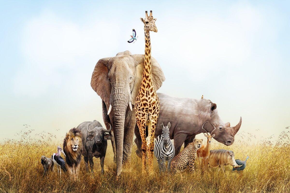 zoo e parchi zoologici