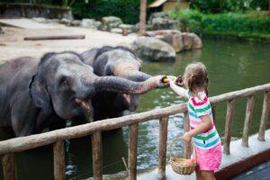 Scopriamo gli Zoo e i parchi Zoologici