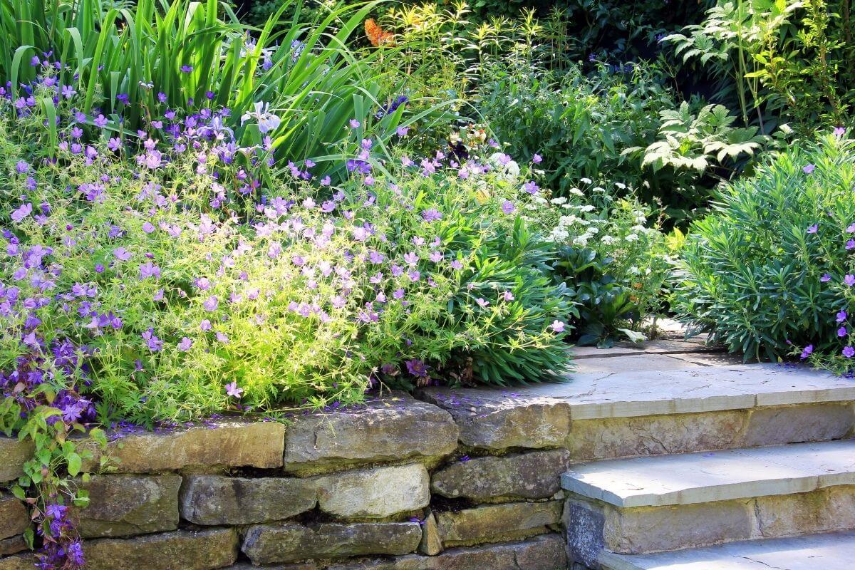 Come e quando innaffiare il giardino?
