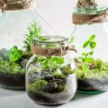 Creare un terrario fai da te