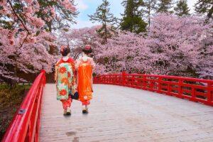 Hanami l'antica tradizione di ammirare i fiori in primavera