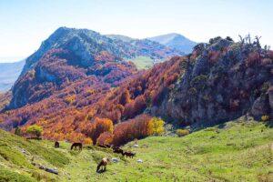I più bei parchi dove fare pic-nic in Calabria