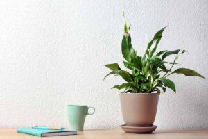 Quali sono le migliori piante da ufficio