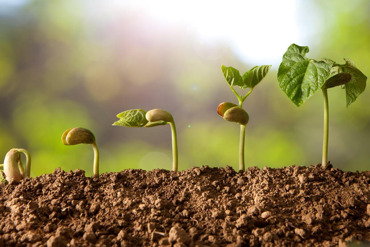 orto domestico - sostenibilità e scienza