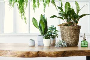 Bisogni delle piante - piante in casa
