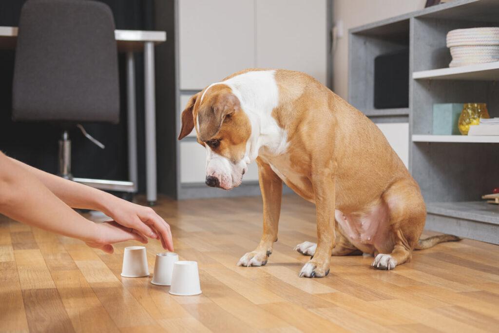 cosa sono gli asili per cani?