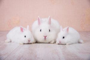 Come prenderci cura di un coniglio domestico
