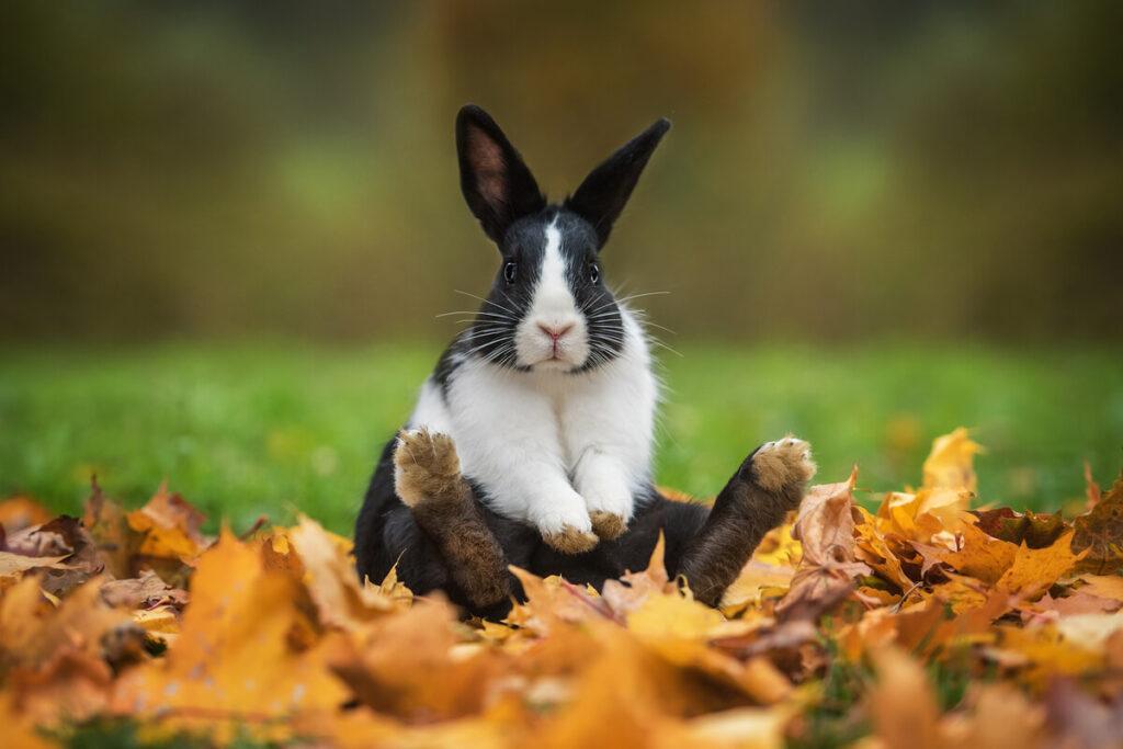 Come prenderci cura del coniglio domestico