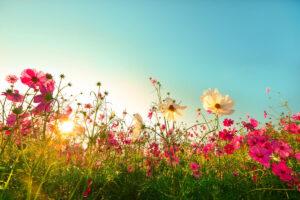 Cosa provano i fiori